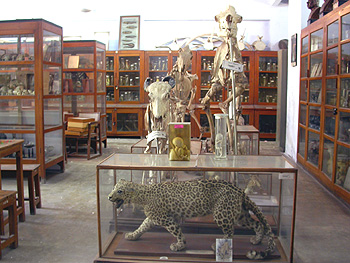 Museum - Department of Zoology
